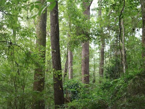20 Acres In Leake County : Carthage : Leake County : Mississippi