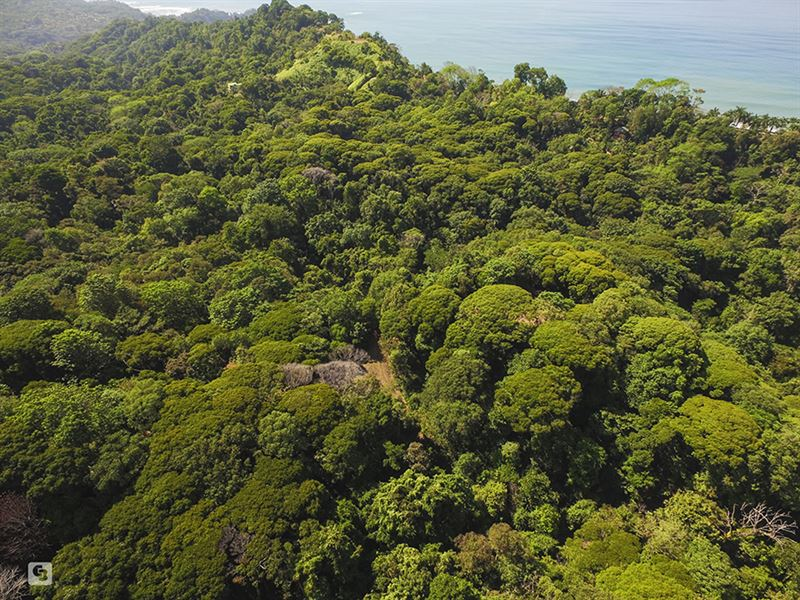 Costa Rica 207 Ac Investment Land : Domincal : Costa Rica