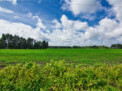 154 Acres Of Turbeville Farmland : Turbeville : Clarendon County : South Carolina