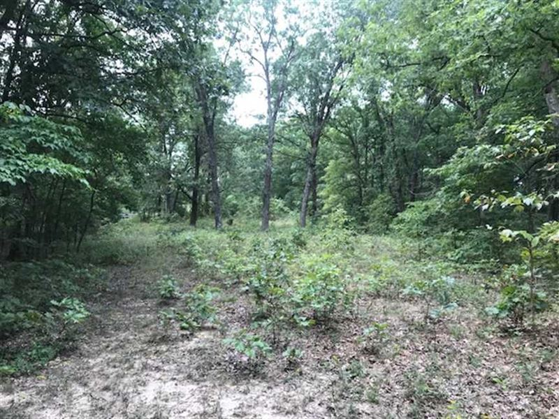 Great 140 Acre Timber Tract-Huntin : Stover : Morgan County : Missouri