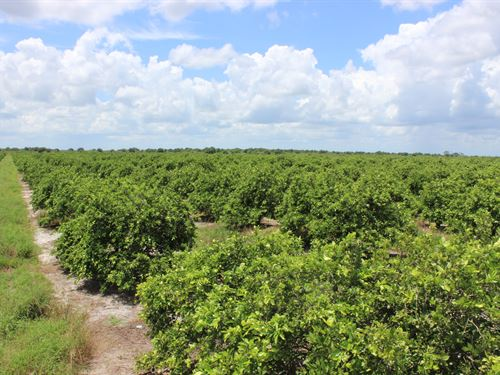 93 Acres. Income Producing Farmland : Labelle : Hendry County : Florida