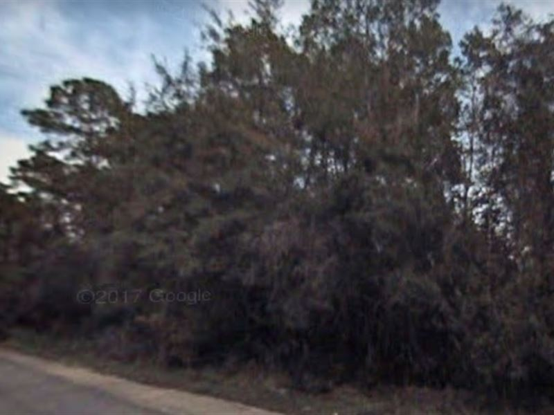 Putnam County, Fl $16,000 Neg : Satsuma : Putnam County : Florida