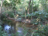 Turkey Creek Runs Through It : Carrollton : Carroll County : Georgia