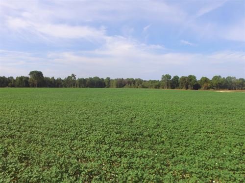 Tom Gibson Farm : Gibson : Scotland County : North Carolina