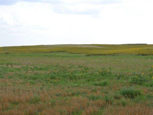 Dubois Trust Dryland : Chappell : Deuel County : Nebraska