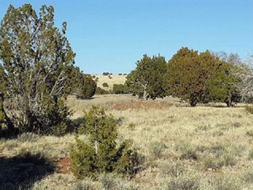 1.12 Acres In Concho, AZ : Concho : Apache County : Arizona