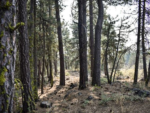 2.43 Acres In Bonanza, OR : Bonanza : Klamath County : Oregon