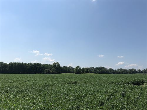 For Sale 70+/- Acres Cropland : Gadsden : Crockett County : Tennessee