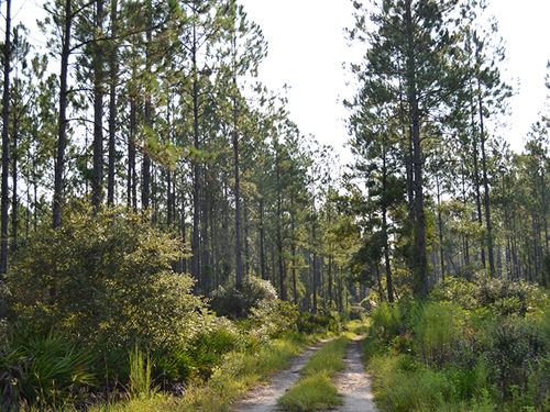 Coulter Ridge Hunting Tract : Gulf Hammock : Levy County : Florida