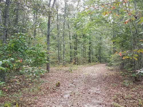 Muscadine Hardwoods : Muscadine : Cleburne County : Alabama