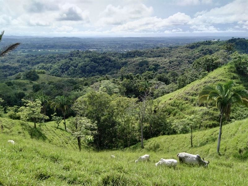 Very Large Cattle Ranch Parrita : Parrita : Costa Rica