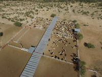 Cattle Ranch, Hunting Ranch : Cabora : Mexico
