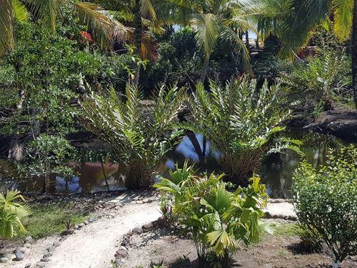 Bocas Del Toro Coastal Beach Lot : Sal Creek : Panama