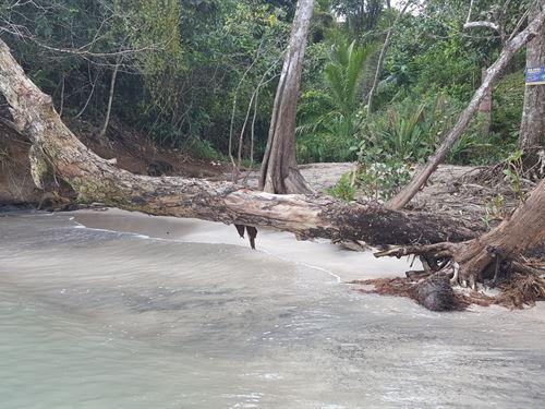 1 Acre Bocas Del Toro Sand : Punta Laurel : Panama