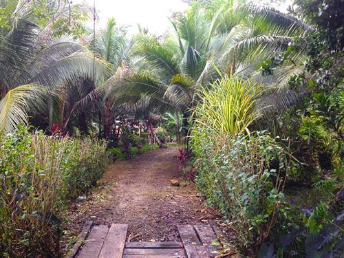 Titled Land, Short Walk, Bluff : Bocas Del Toro : Panama