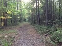 Mostly Pine Rural AR Timberland : Thornton : Calhoun County : Arkansas