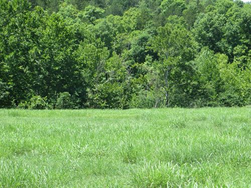 Creek Front Property in The Ozarks : Clarkridge : Baxter County : Arkansas
