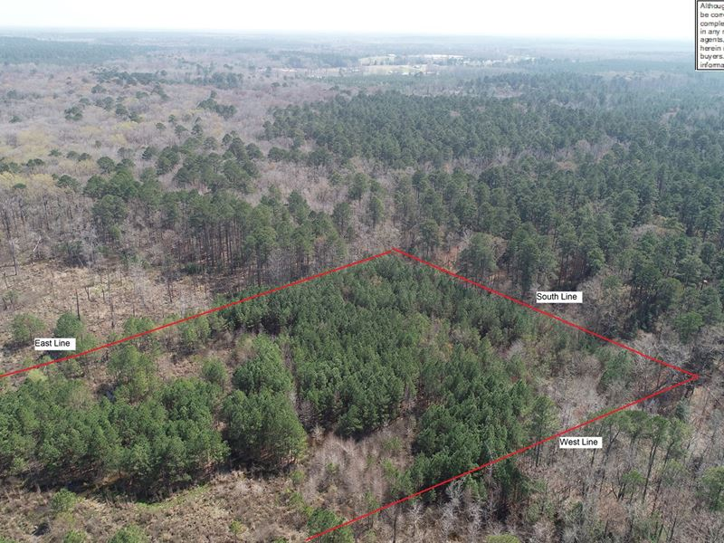 South Arkansas Wetland Timber Area : El Dorado : Union County : Arkansas