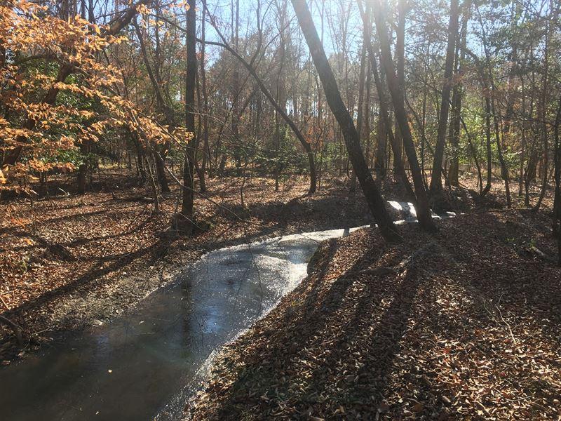 Natural Undeveloped Timberland : El Dorado : Union County : Arkansas