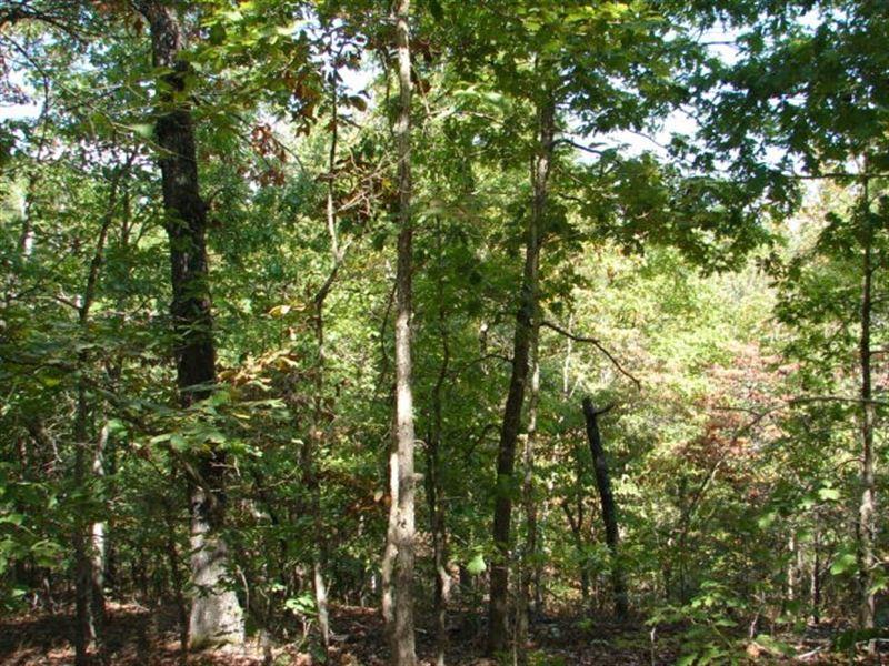 Ozarks Acreage Joining Corp Land : Elizabeth : Fulton County : Arkansas