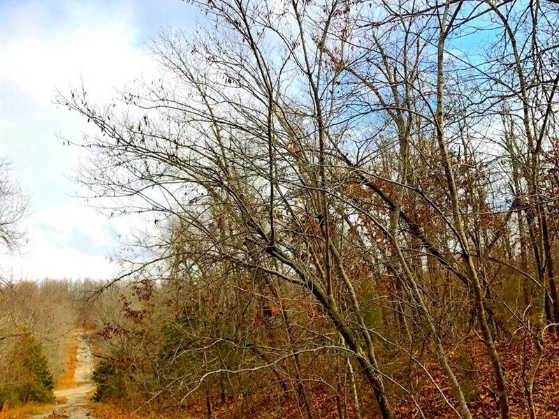 Vacant Lot Horseshoe Bend, Arkansas : Horseshoe Bend : Izard County : Arkansas