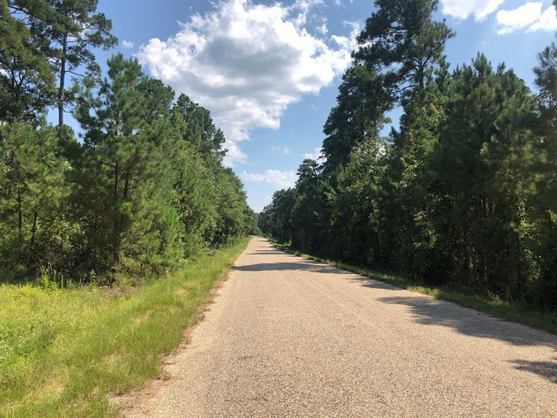 Pine Timber Land Home Potential : Hampton : Calhoun County : Arkansas