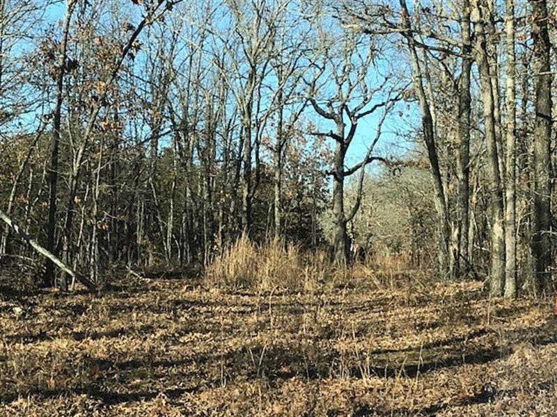Wooded Acreage Pond Buffalo River : Kingston : Madison County : Arkansas