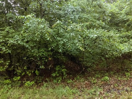 80 Acres Timber Covered Property : Knob : Clay County : Arkansas