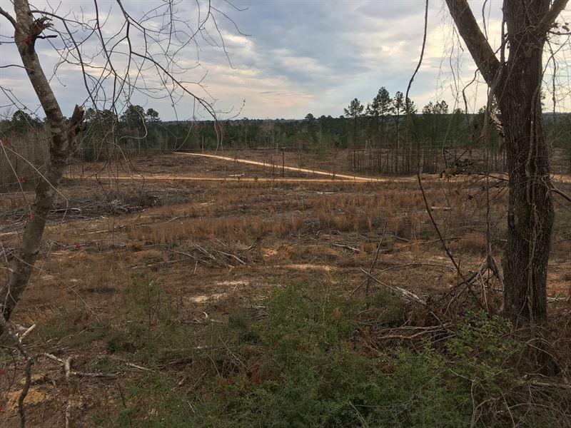 Upland Oil Field Open Land : Lewisville : Lafayette County : Arkansas
