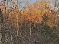 Hunting Property Priced Right : Hardy : Fulton County : Arkansas