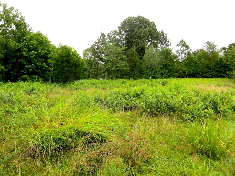 Vacant Land Mammoth Spring : Mammoth Spring : Fulton County : Arkansas