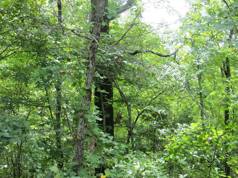 Vacant Land For Sale in The Ozarks : Mammoth Spring : Fulton County : Arkansas
