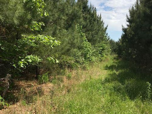 Cleveland County Planted Pine : New Edinburg : Cleveland County : Arkansas