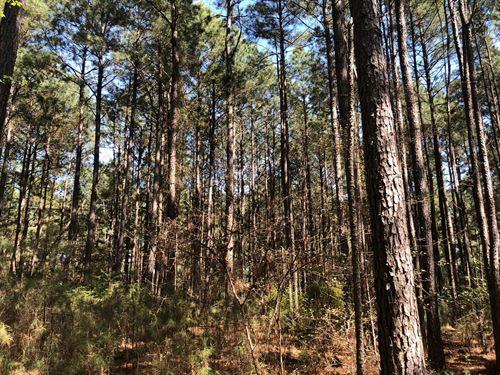 Natural Pine Timber Land Cleveland : New Edinburg : Cleveland County : Arkansas