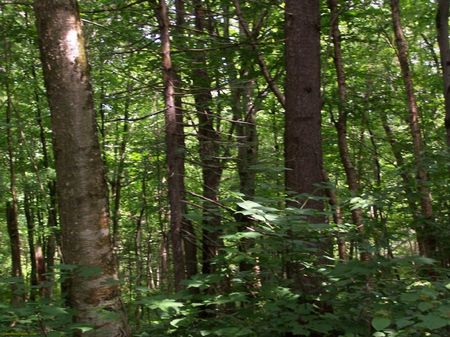 Timberland Investment / Hunting : West Turin : Lewis County : New York