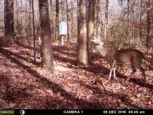 Hunting Acreage Close To Jonesboro : Smithville : Lawrence County : Arkansas
