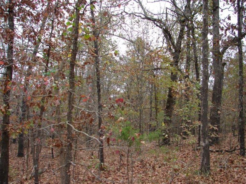 Arkansas Recreational Acreage : Sturkie : Fulton County : Arkansas