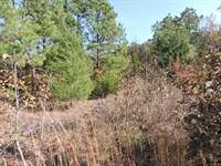 52 Acres of Wildlife Haven : Waldron : Scott County : Arkansas