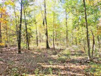 Timber Land 90Ac Bull Shoals Lake : Yellville : Marion County : Arkansas