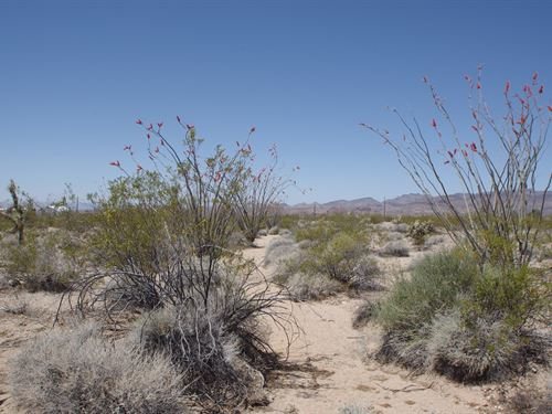 Vacant Desert Land in Yucca : Yucca : Mohave County : Arizona