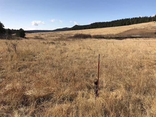 Beautiful Colorado Mountain Horse : Florissant : Teller County : Colorado