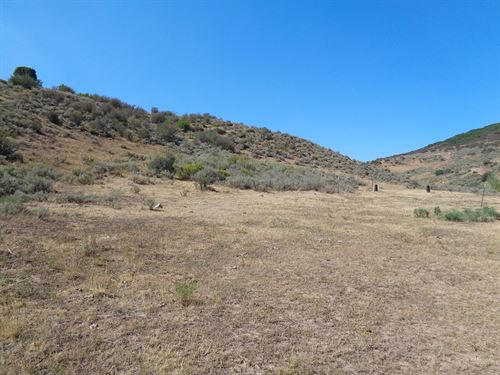 Colorado Mountain Hunting Property : Collbran : Mesa County : Colorado