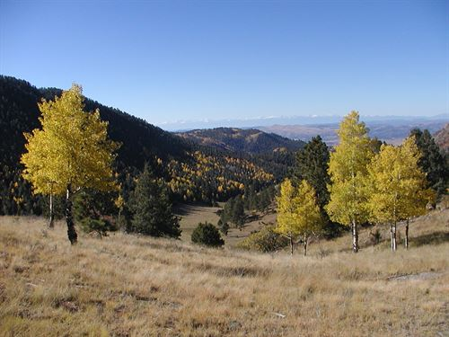 Colorado 35 Acres Well Driveway : Cripple Creek : Teller County : Colorado