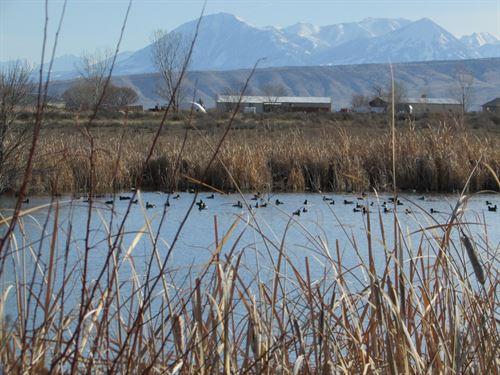CO Duck Goose Recreational Hunting : Delta : Colorado
