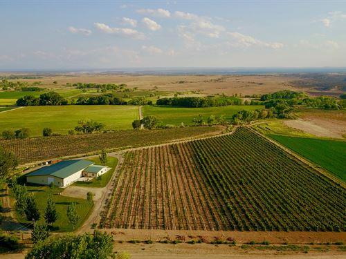 Western Colorado Ranch, Vineyard : Olathe : Montrose County : Colorado