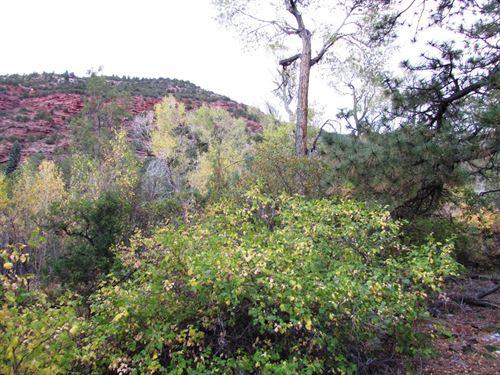 CO Mountain View Bldg Lot Creek : Ridgway : Ouray County : Colorado