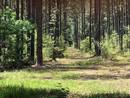 Timber Hunting Land Holmes County : Bonifay : Holmes County : Florida