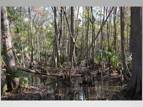 56 Acre Hunting/Recreational : Cedar Key : Levy County : Florida
