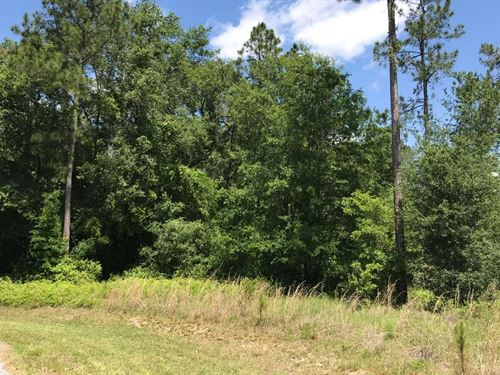 Nice Homes Only North Florida Lot : Live Oak : Suwannee County : Florida