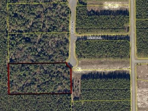 Nearly 5 Natural Acres Undeveloped : Live Oak : Suwannee County : Florida